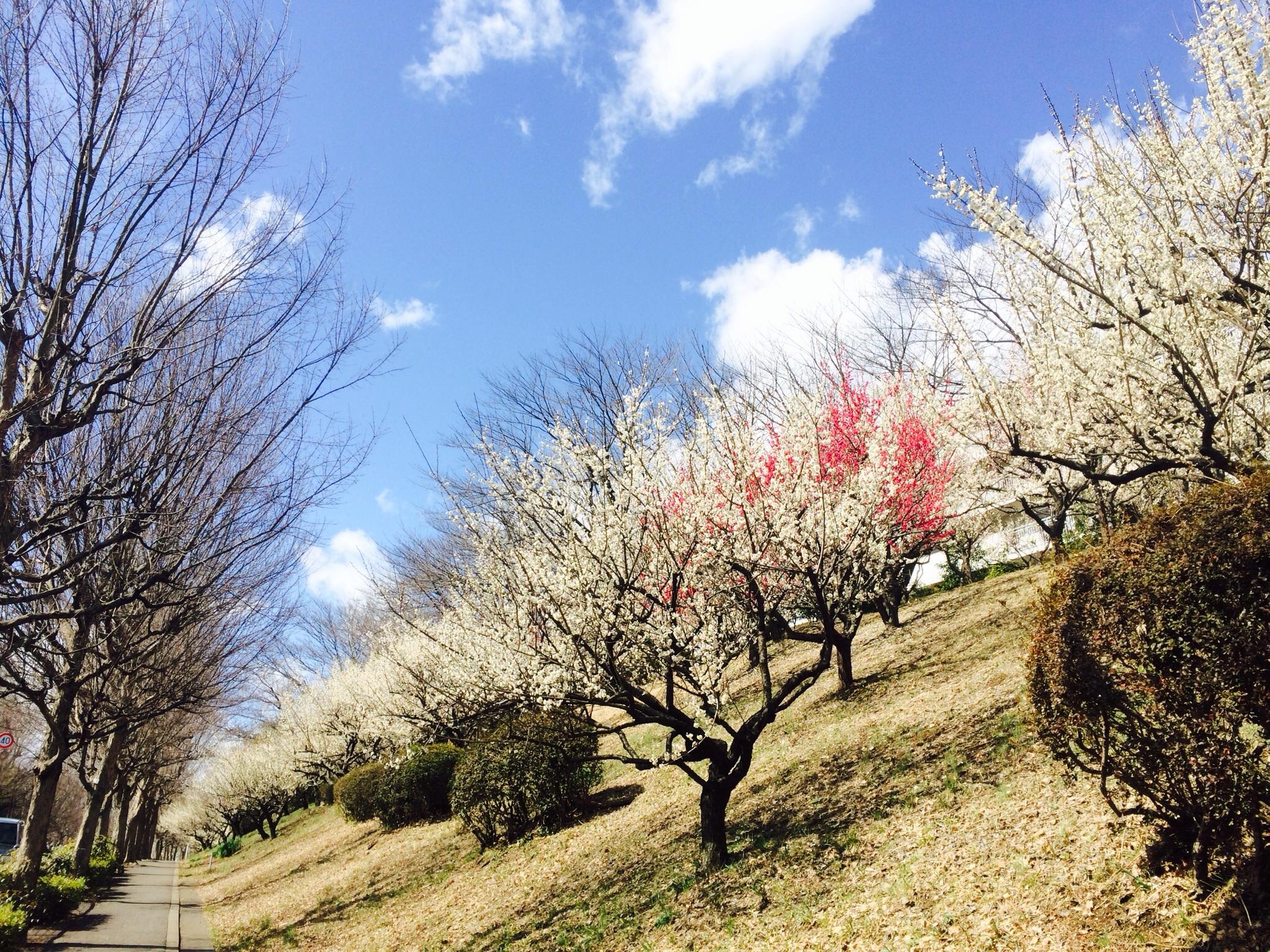 春の景色1